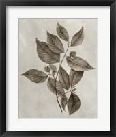 Framed Arbor Specimen III