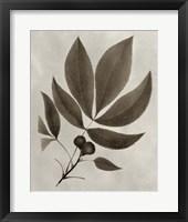 Framed Arbor Specimen V