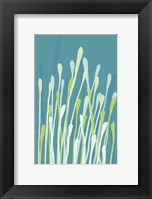 Framed Grasses I
