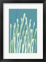 Framed Grasses I