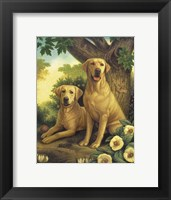 Framed Yellow Labs