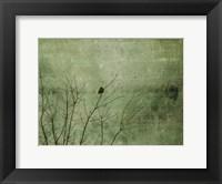 Framed Blackbird