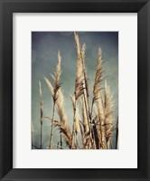 Framed Color The Wind