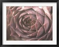 Framed Aubergine
