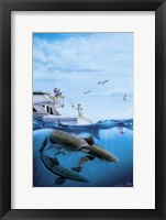 Framed Cobia Quest