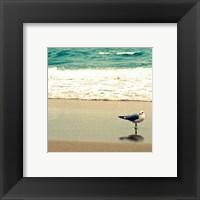 Framed Seagull on Beach