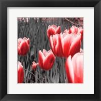 Framed Red Tulips I