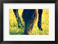 Framed Horse in the Meadow I