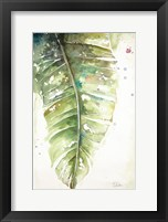 Framed Watercolor Plantain Leaves I