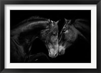 Framed Stallion and the Marell