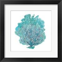 Framed Teal Coral on White I