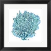 Framed Teal Coral on White II