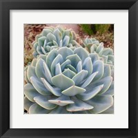 Framed Poetic Succulent Square III