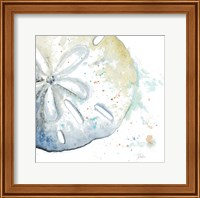 Framed Water Sand Dollar