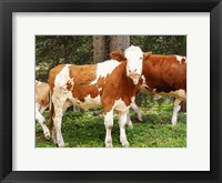 Framed Swiss Cows