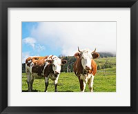 Framed Country Cows