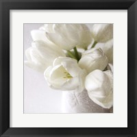 Framed Vanishing in the White Elegance Square