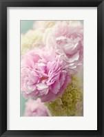Framed Soft Pink Blooms