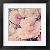 Framed Pink Blossoms I