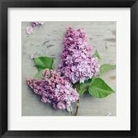 Framed Fresh Lavender Blooms
