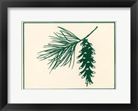 Framed Green Pine