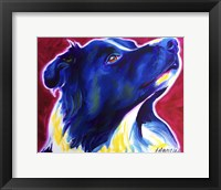 Framed Border Collie - Bright Future