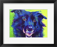 Framed Border Collie - Viktor