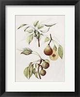 Framed Pine Street Pears