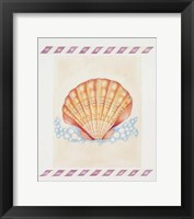 Framed Shell Cardita