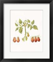 Framed Growing Romas