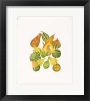 Framed Heirloom Gourds