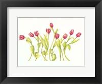 Framed Nine Tulips Twirling