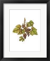 Framed Vintage Grapes