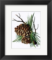 Framed Pine Cone