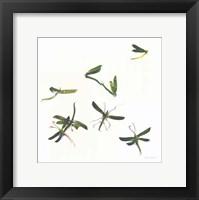 Framed Stir Fly