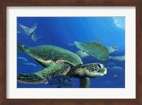 Framed Green Sea Turtles