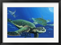 Framed Green Sea Turtles