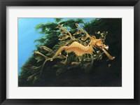 Framed Leafly Sea Dragon