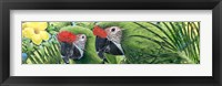 Framed Military Macaws