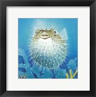 Framed Puffer Fish