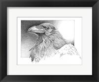 Framed Ravens Head