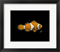 Framed Clown Fish