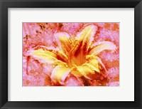 Framed Flower XII