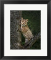 Framed Bobcat Kitten Poses Against Tree Trunk