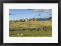 Framed Lamar Valley - Pronghorn And Bison