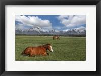 Framed Teton Horses