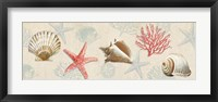 Framed Gifts from the Ocean
