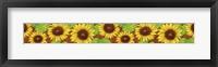 Framed Sunflower border