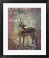 Framed Africa Antelope