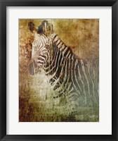 Framed Africa Zebra